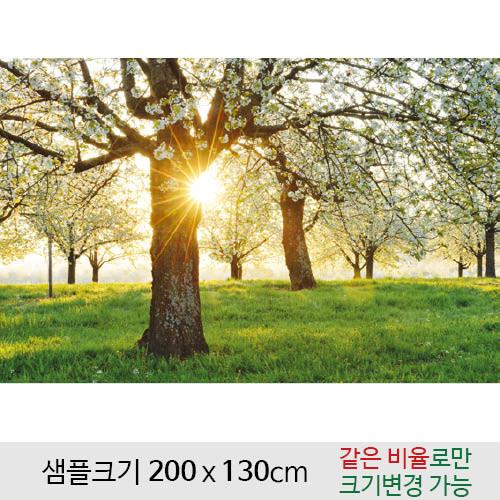 봄배경현수막(벚꽃)-115 (200 x 130)