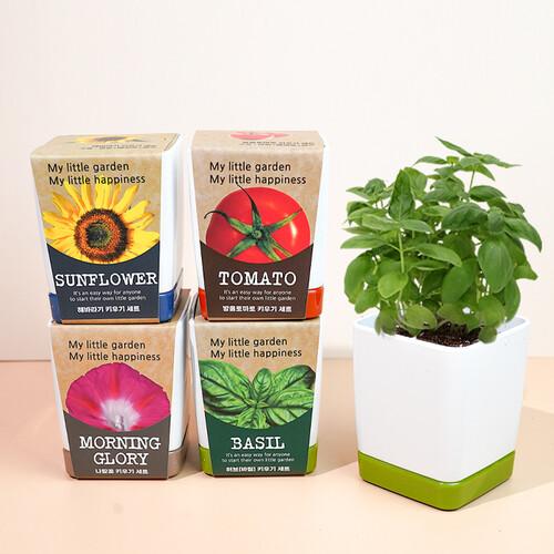 투톤사각화분-방울토마토