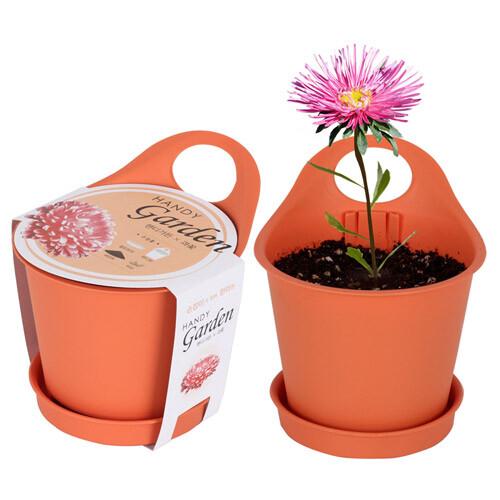 핸디가든 - 과꽃 키우기