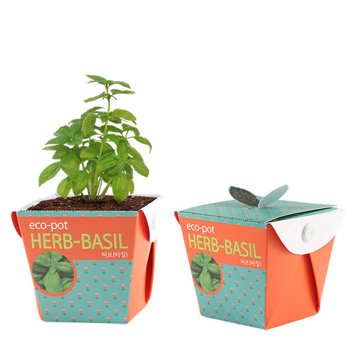 eco pot - 허브(바질)