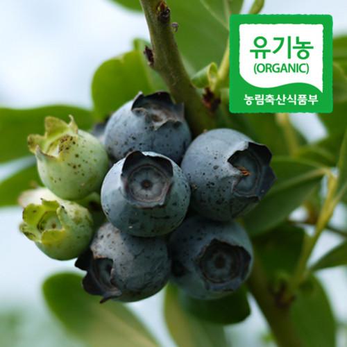 순창제일교회 조상단 권사의 유기농 블루베리 하우스 (생과/2kg)