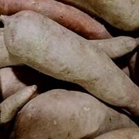 횡성 세계로교회의 횡성 호박고구마 (5kg, 10kg/크기혼합)