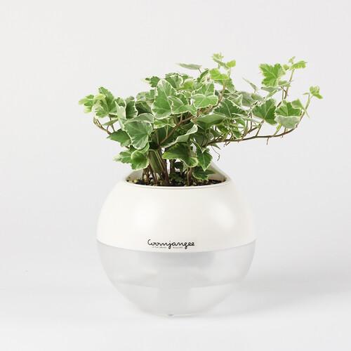 메이크정글 투톤볼플랜터10cm 공기정화식물 화분