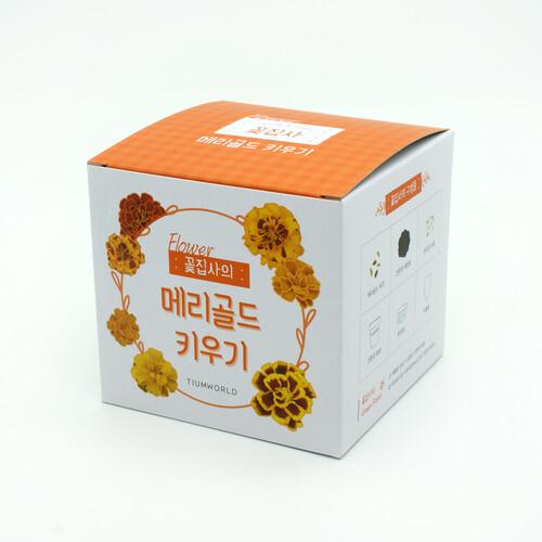 (우리집 정원가꾸기) 꽃집사_메리골드 키우기