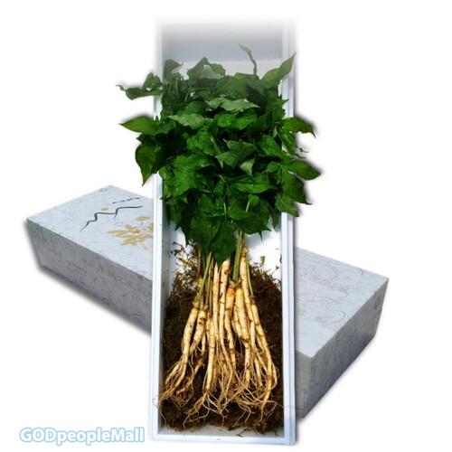 GAP 수경재배 새싹삼 (100g, 200g)