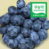 순창제일교회 조상단 권사의 무농약 블루베리 (생과/1kg, 2kg)