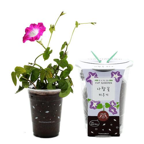 [컵안의 작은정원] 컵가든 - 나팔꽃