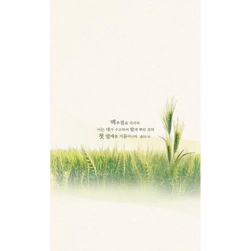 진흥 맥추감사주보 6면 - 2127 (1속 100장)