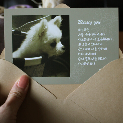 블레싱유 말씀카드+봉투(B.시편121:5~6-강아지)-피터카페