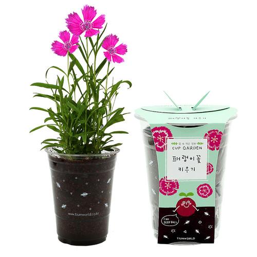 [컵안의 작은정원] 컵가든 - 패랭이꽃