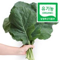 쌍샘자연교회 전성수 전도사의 유기농 친환경 케일 - 녹즙용 2kg