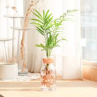 메이크정글 GLASSY NO.6 공기정화식물 유리병 수경화분