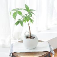 메이크정글 POTTY10 공기정화식물 원형 도자기 수경화분 10cm