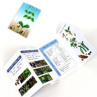 [만들기패키지] 북아트-식물의한살이 (5개이상구매가능)