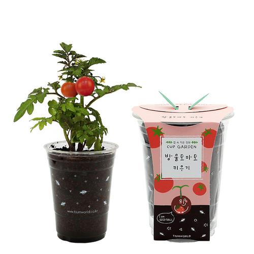 [컵안의 작은정원] 컵가든 - 방울토마토