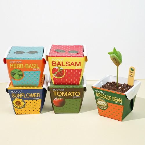 eco pot - 방울토마토