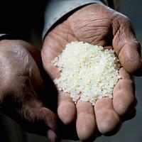 예산중앙감리교회 유기현 권사의 예산 쌀(백미 20kg)