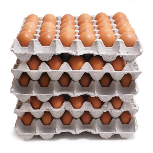2020 부활절 구운달걀_대란_미포장란(5판-총150알)