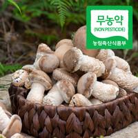 설산소리 무농약 솔향 버섯 (송화버섯) 500g, 1kg