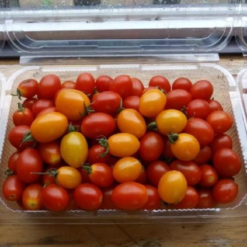 세계로교회 세계로농원의 방울토마토 (2kg, 혼합)