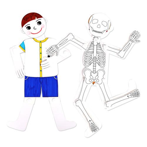 [만들기패키지] 우리 몸을 관찰해보아요-관절인형 (5개이상구매가능)