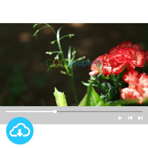 예배용 영상클립(배경) 1 by 빛나는시온 / 이메일발송(파일)