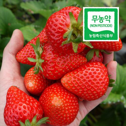 순창제일교회 조상단 권사의 친환경 무농약 딸기2kg (500g*4팩)