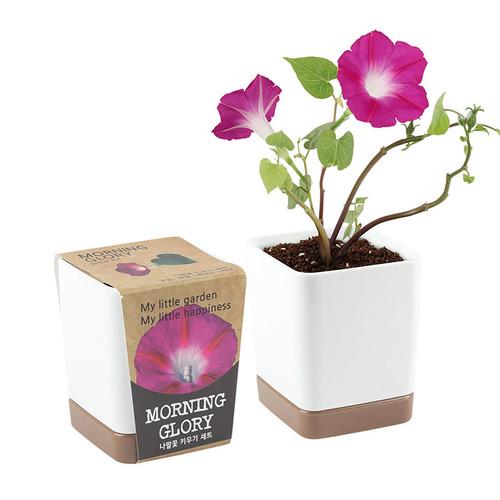 투톤사각화분 - 나팔꽃