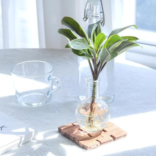 메이크정글 GLASSY NO.1 공기정화식물 유리병 수경화분