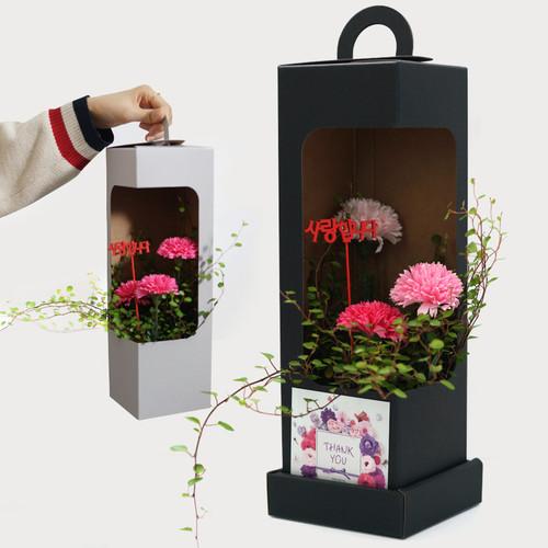 비누꽃 카네이션 X 반려식물 트리안 콜라보 선물박스