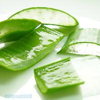입암감리교회 김영옥 권사의 생 알로에(생물/2kg)